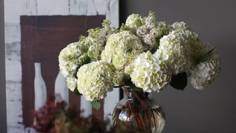 Kuidas hoolitseda lillekimbu eest