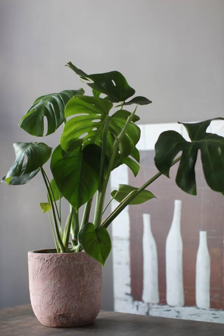 Какие комнатные растения себе выбрать?